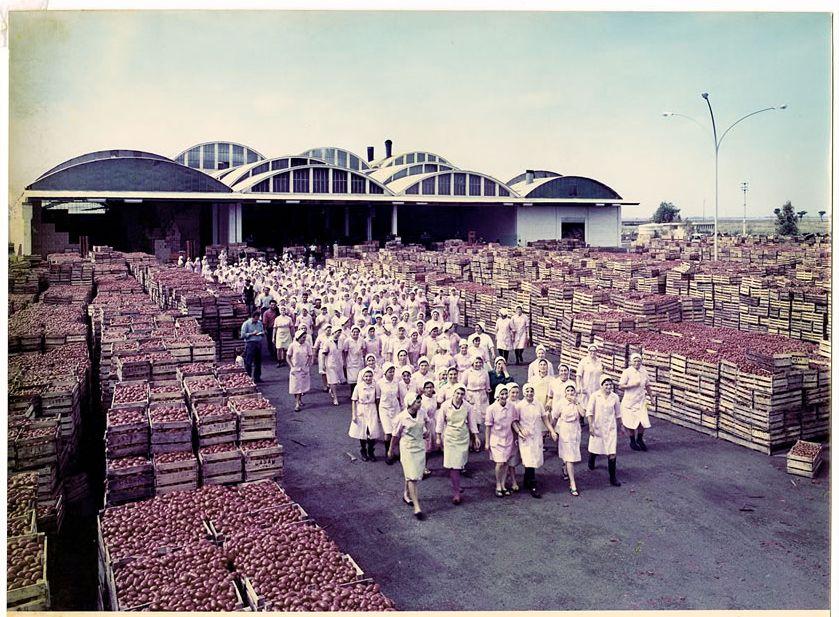 Lavoratrici in uscita dallo stabilimento dell'azienda Conserve Alimentari Sarde - Casar, anni Sessanta (foto di Comm. Vaghi Parma - Atelier Fotocinematografico)